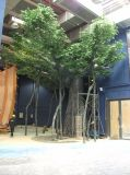 Валы сада ландшафта баньяна искусственной стеклоткани большие