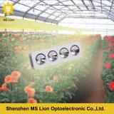 수경법 램프 800W 가득 차있는 스펙트럼 LED 플랜트는 가벼운 옥수수 속 LED를 증가한다 빛을 증가한다