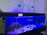 Luz marina completa del acuario del espectro 30*3W LED de la maqueta caliente