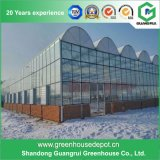 Constructeur en verre de serre chaude de prix usine avec le système de ventilation