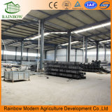 Sistemas de control climático de venta caliente Agricultura Glass Venlo Greenhouse