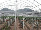 최신 중국 공장에서 온실을%s 판매에 의하여 직류 전기를 통하는 강철 해골