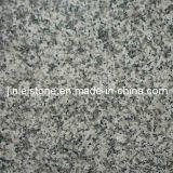 Mattonelle Polished del granito G623 per il rivestimento della parete del pavimento