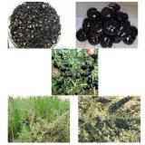 Bacca nera secca rossa di Goji delle erbe organiche della nespola