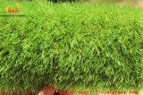 裏庭のための自然な見る総合的な草の庭の芝生