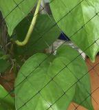 Rede de Strectch para a bio esteira do coco
