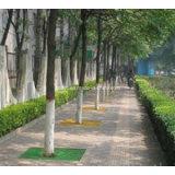 Grelhas fáceis da árvore da fibra de vidro FRP GRP da estaca com vário tamanho