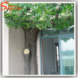 Fiber Glass의 상록 Artificial Ficus Tree Made