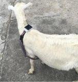 Inseguitore animale RF-V26, cercatore di GPS della più nuova mini mucca solare impermeabile delle pecore IP66 di GPS con la pista libera dell'IOS APP del Android