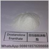 Polvo esteroide blanco Drostanolone Enanthate para el crecimiento del músculo