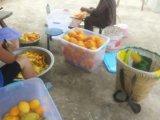Berufsfrucht-trocknendes Geräten-Frucht-Trockner-Maschinen-industrielles Frucht-Entwässerungsmittel