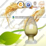 Poudre 80% Ginsenoside d'extrait de ginseng d'approvisionnement d'usine