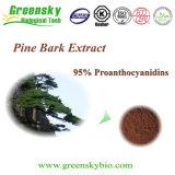 95% Proanthocyanidins를 가진 프랑스 소나무 수피 추출