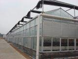 Invernadero de cristal inteligente Growing vegetal de la venta de Direc de la fábrica