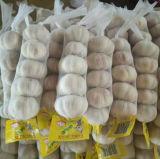 고품질 중국 순수한 백색 마늘 (5.0cm는 올린다)