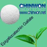 6. 녹차 체중 감소 녹차 추출 차 Polyphenols 98%