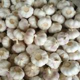 Aglio bianco fresco della nuova raccolta 2017, aglio bianco puro