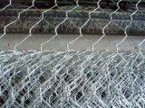 Galvanized/PVCの六角形の金網の工場