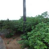 Гальванизированная искусственная закамуфлированная башня вала сосенки для телекоммуникаций