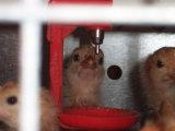Клетка батареи цыпленоков для птицефермы для сбывания (типа рамка h)