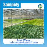 Casa verde de vidro comercial de Multispan para o tomate