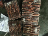 Calamares de islão do mar argentino para isca
