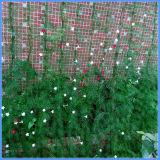 Il nylon all'ingrosso scoraggia la rete del giardino degli uccelli per le piante/alberi