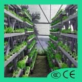 [هيغقوليتي] وكثير مواتي سعر متأخّر [إنفيرونمنتل بروتكأيشن] اللون الأخضر [هدروبونيك] دفيئة زراعة تجهيز