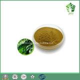 自然なOleuropein 4%~60%のHydroxytyrosol 1%のオリーブ色の葉のエキス