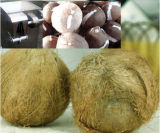 Hochwertiger ausgetrockneter Kokosnuss-Produktionszweig