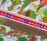 Wasserdichte 260W LED wachsen für hohe Pflanzenvolles Spektrum hell