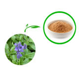Extrato prudente da folha de /Sage do extrato com ácido ácido de Rosmarinic Carnosic
