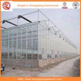 日よけシステムが付いている花またはフルーツまたは野菜栽培のポリカーボネートシートの温室