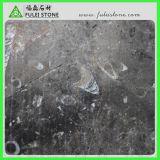 ジュラ紀の海洋の灰色の化石の大理石の平板