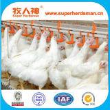 As aves domésticas automáticas controlam o equipamento da vertente para a galinha de grelha