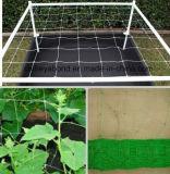 La rete di sostegno della pianta, rete dell'Anti-Uccello del giardino di agricoltura, annerisce la rete di plastica sporta