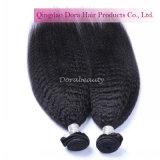 Commercio all'ingrosso diritto crespo dei capelli umani dei capelli indiani del Virgin dalla fabbrica dei capelli