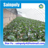 Парник низкой стоимости тавра Sainpoly солнечный для баклажана