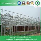 Nueva estructura del invernadero de Venlo del diseño para la venta con los repuestos