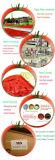 Goma de tomate vendedora caliente de la bolsita 70g de la marca de fábrica de Yoli