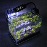 Quadratisches Fisch-Glasbecken