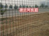 China-Zubehör verwendeter Pool-SicherheitPalisade Latten-/bearbeitetes Eisen, das Eurofence Panel für Verkauf einzäunt