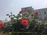 Dh650--De Russische rode Pers van de Pers van de Rol van het kalium Droge