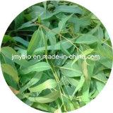 Rifornimento diretto Cineole 80%, olio essenziale dell'eucalyptus, olio di sapore, olio vegetale di Facotry