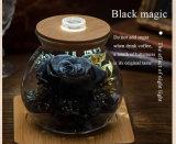 Zwarte Ivenran nam Verse Bloem in het Licht toe