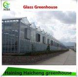 Venlo Typ Glasgewächshaus für Garten