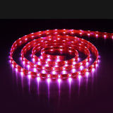 Indicatore luminoso di striscia flessibile di alto potere 30 LEDs/M LED di SMD 5060