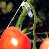 Clips de efecto invernadero de tomate de plástico para el jardín de plantas