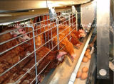 Cage de poulet dans la Chambre de volaille avec l'autre Chambre assortie de machines et de construction préfabriquée