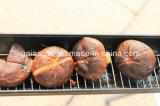 Fornello parabolico solare su efficiente d'profilatura del forno del BBQ